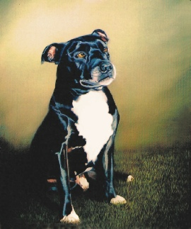 Pet Portrait of of a Dog in Oils.